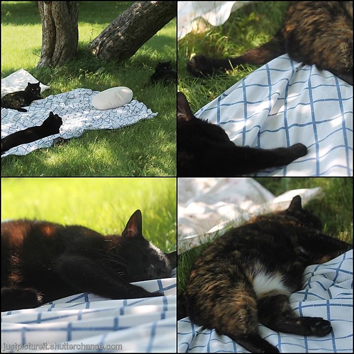 photoblog image Shady Cats