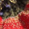 Pollen Pleasure