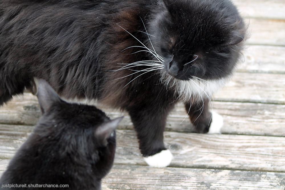 photoblog image Cat Spat