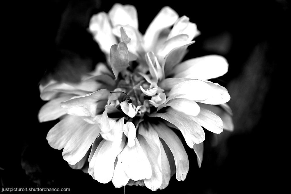 photoblog image Popastery