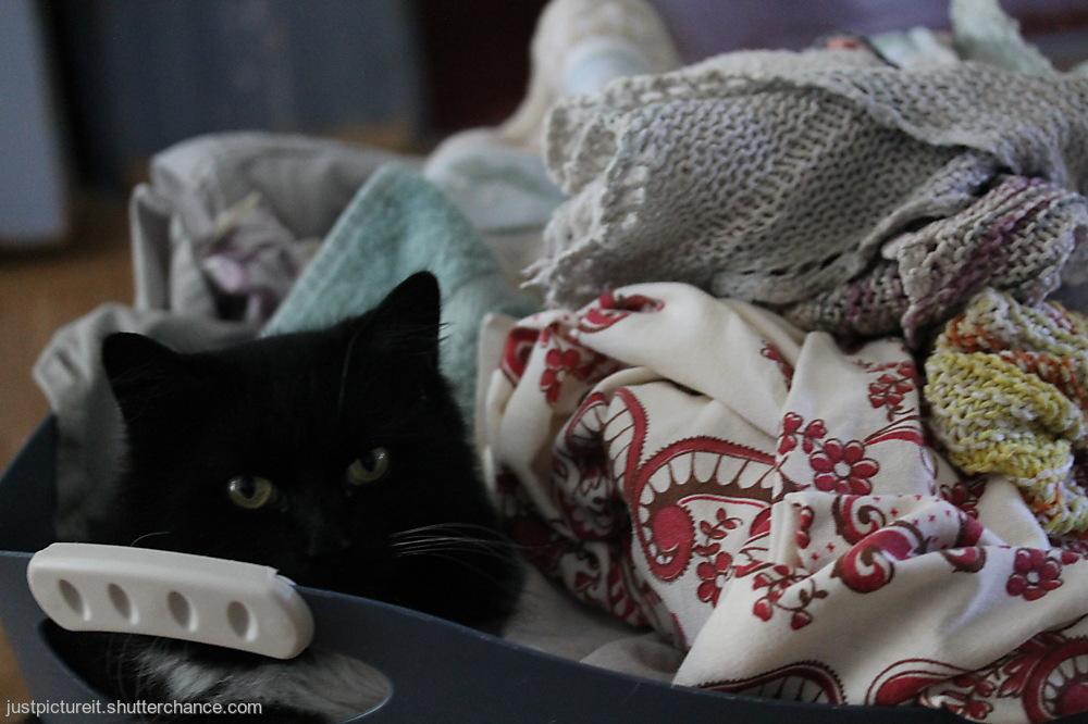 photoblog image Laundry Lady