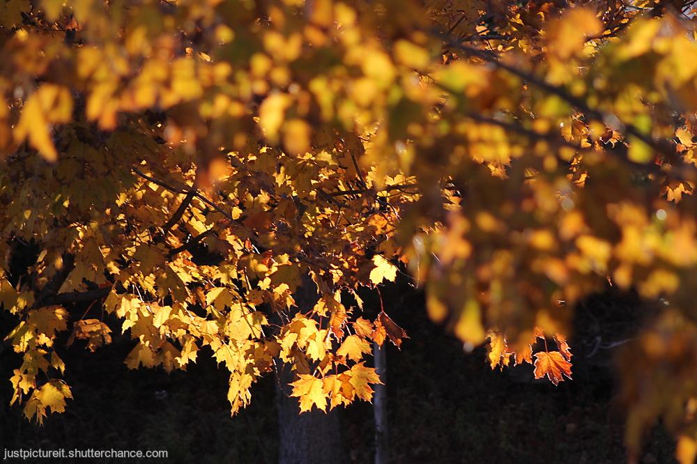photoblog image Autumn Gold