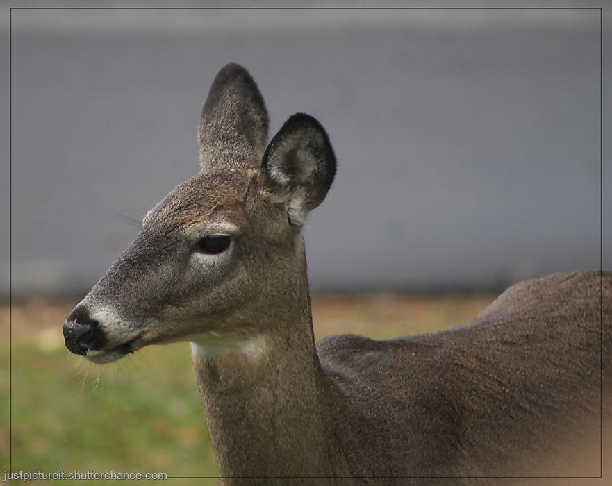 photoblog image Oh Deer!