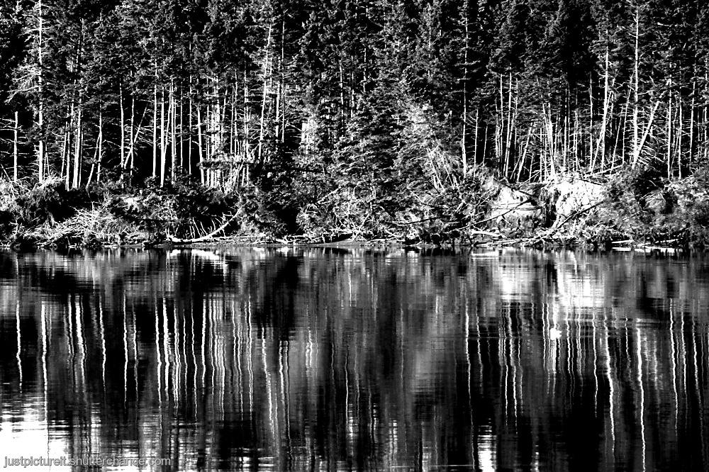 photoblog image River Reflections 5