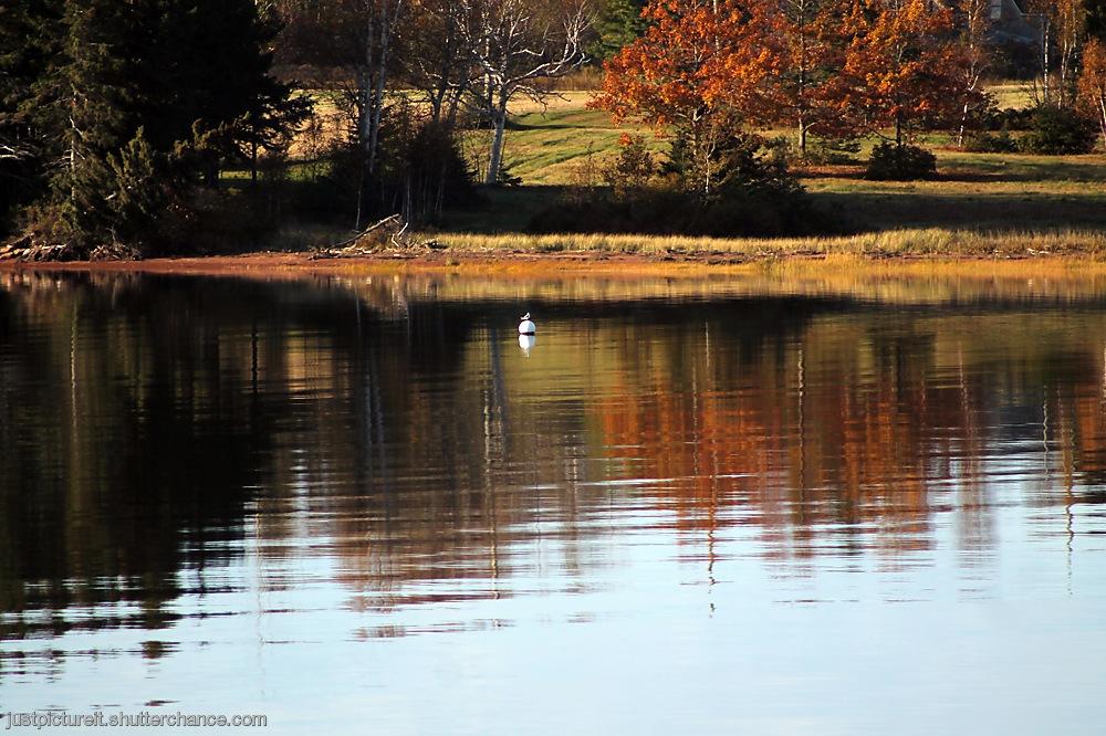 photoblog image River Reflections 2