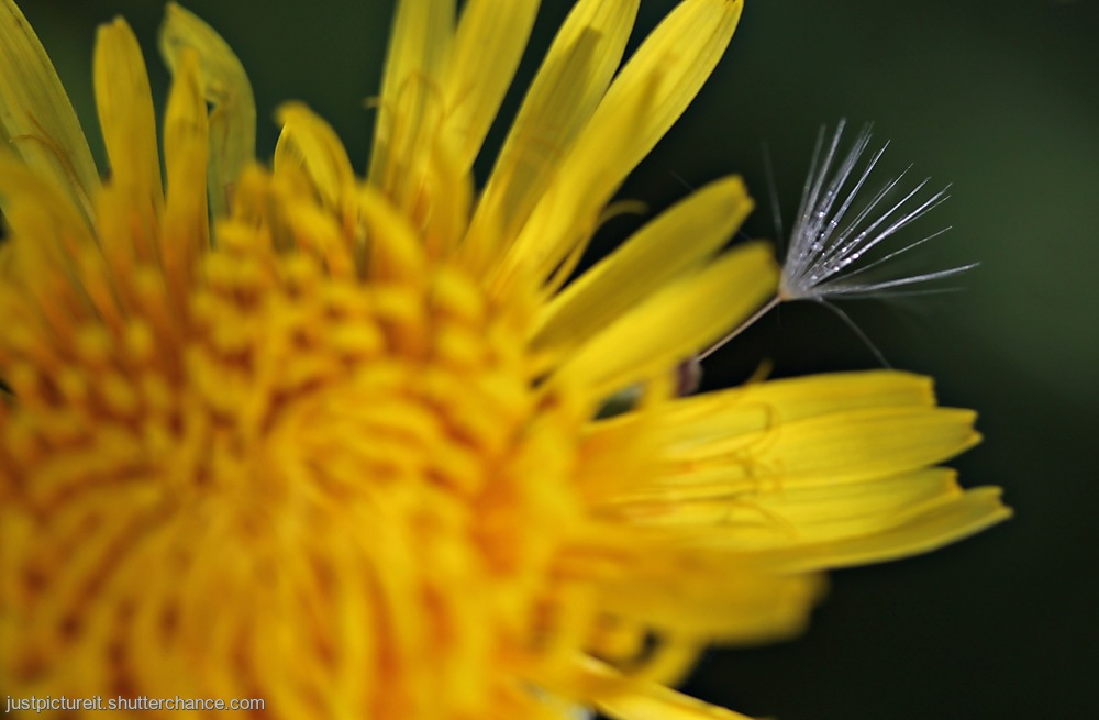 photoblog image Wannabe