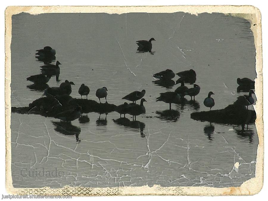 photoblog image Goose Display