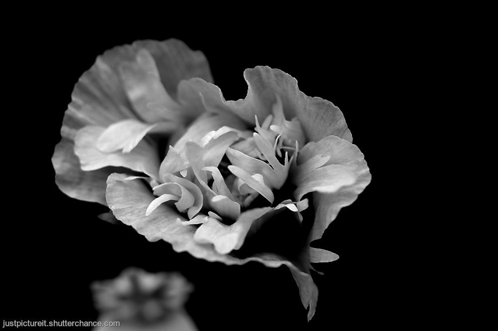 photoblog image Flower Week