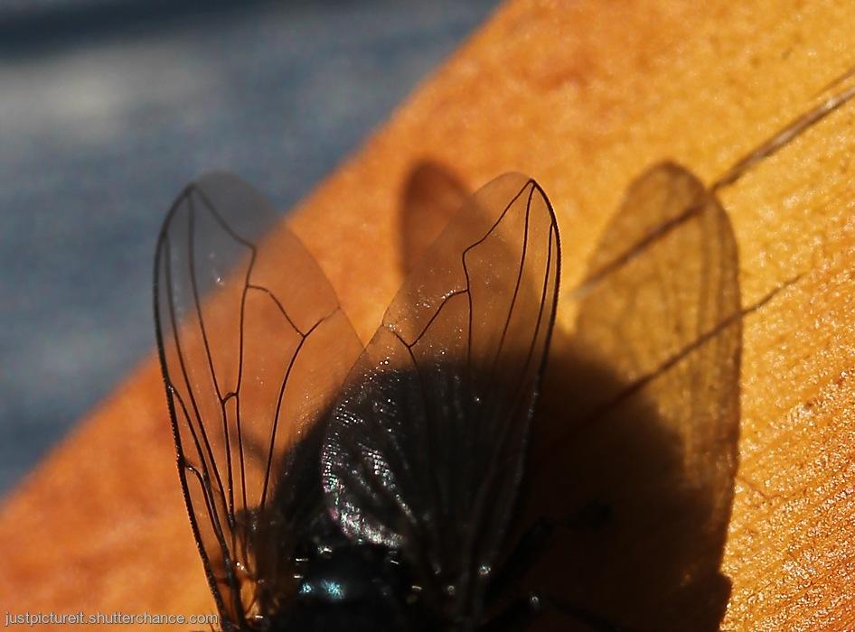 photoblog image Wing Shadows