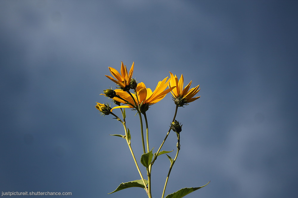 photoblog image Skies With Flowers