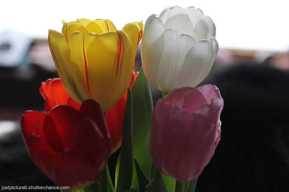 photoblog image Flowers For Friday