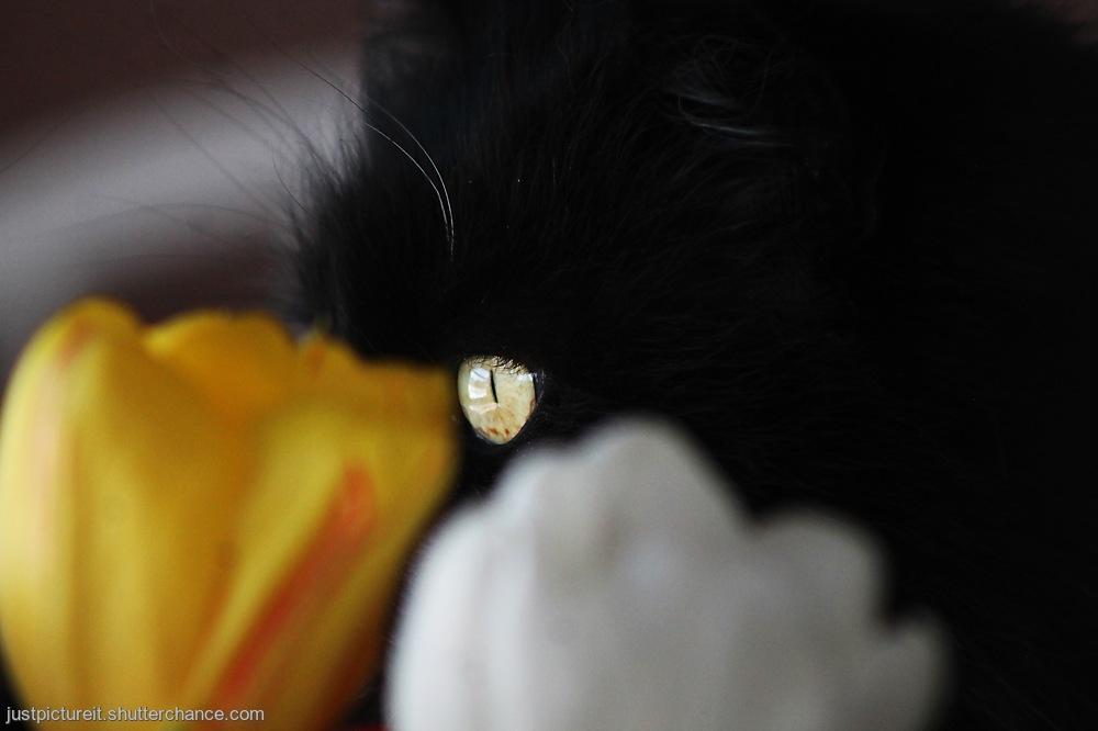 photoblog image The SideEye