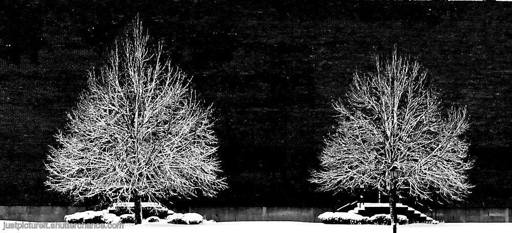 photoblog image First Snow