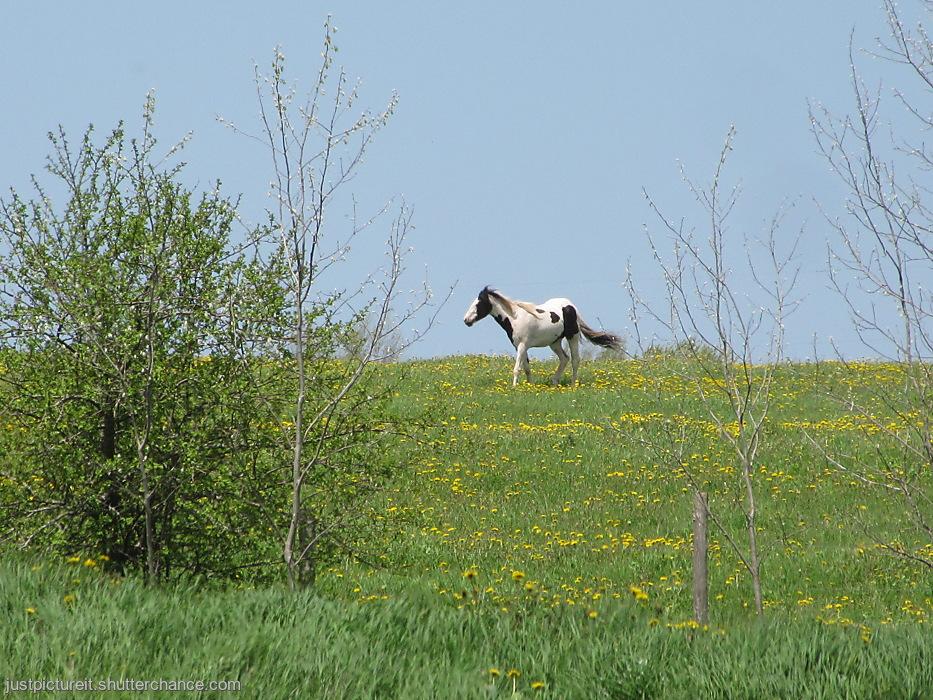 photoblog image Lone Some Horse