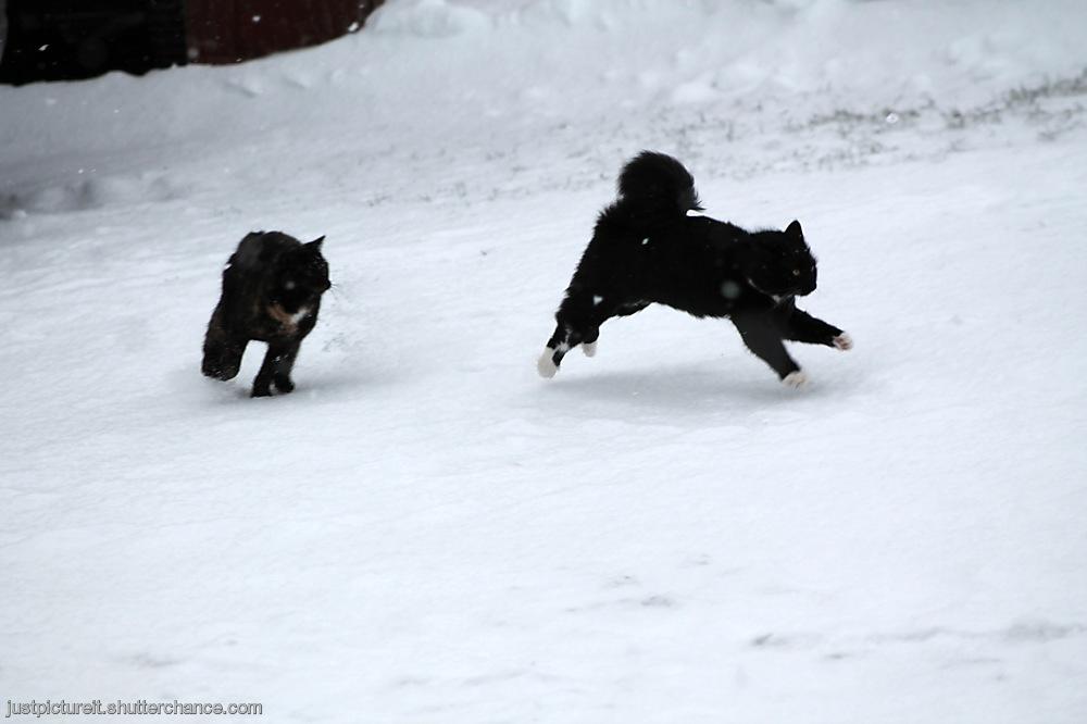 photoblog image Feline Frolics