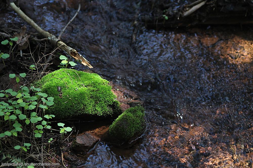 photoblog image Waterside Greens