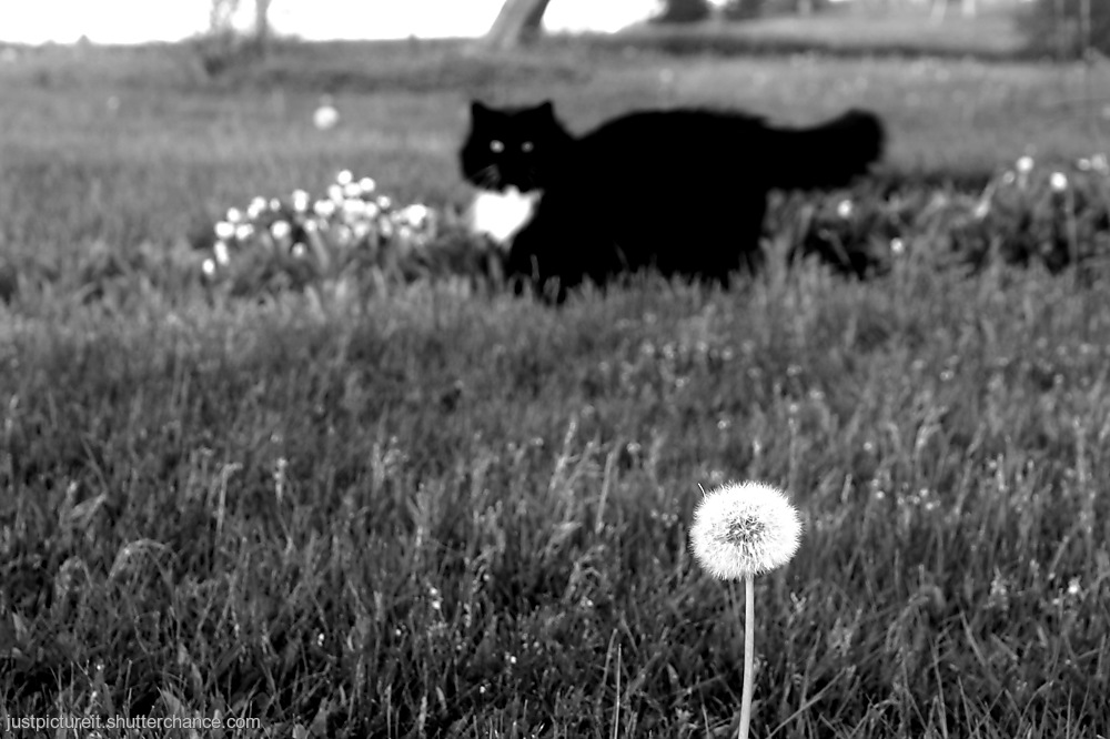 photoblog image Purrl and Ruby Gone a Flower Hunting