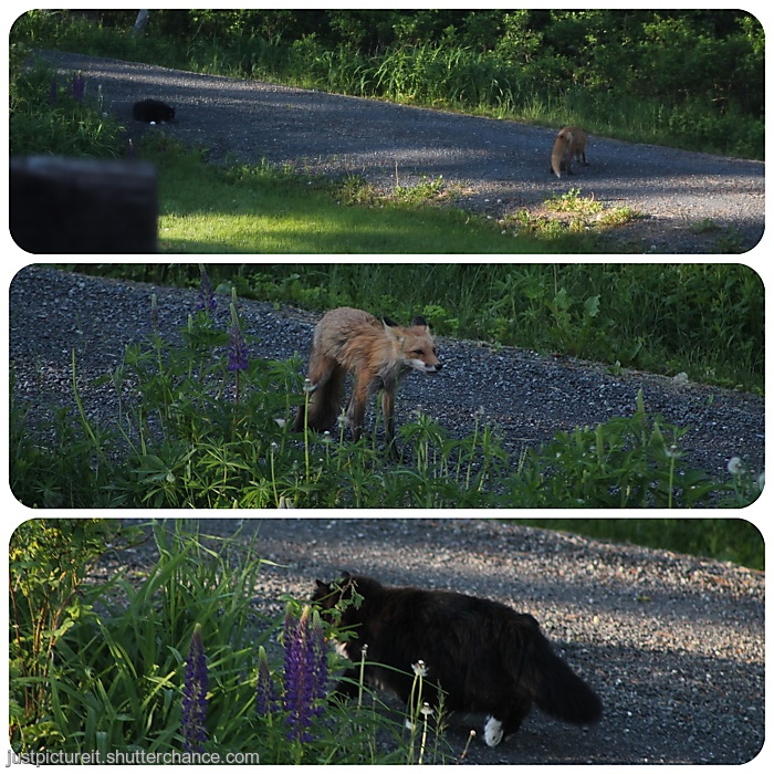 photoblog image Foxy and Purrl