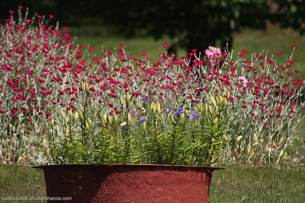 photoblog image Friday Flora