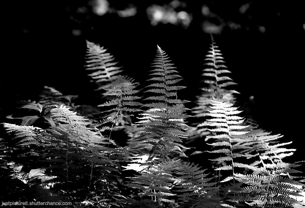 photoblog image Forest Ferns
