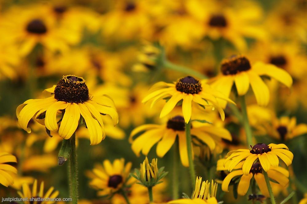 photoblog image Friday Fleurs