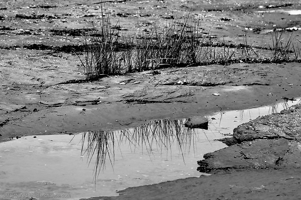 photoblog image Tough Grass