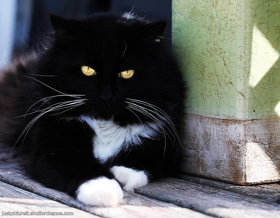 photoblog image Lovely Pets