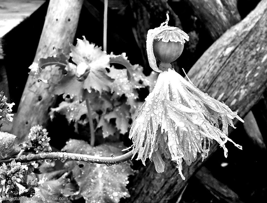 photoblog image Flower Friday
