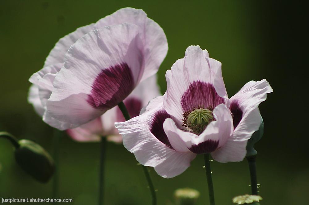 photoblog image Summer Flowers