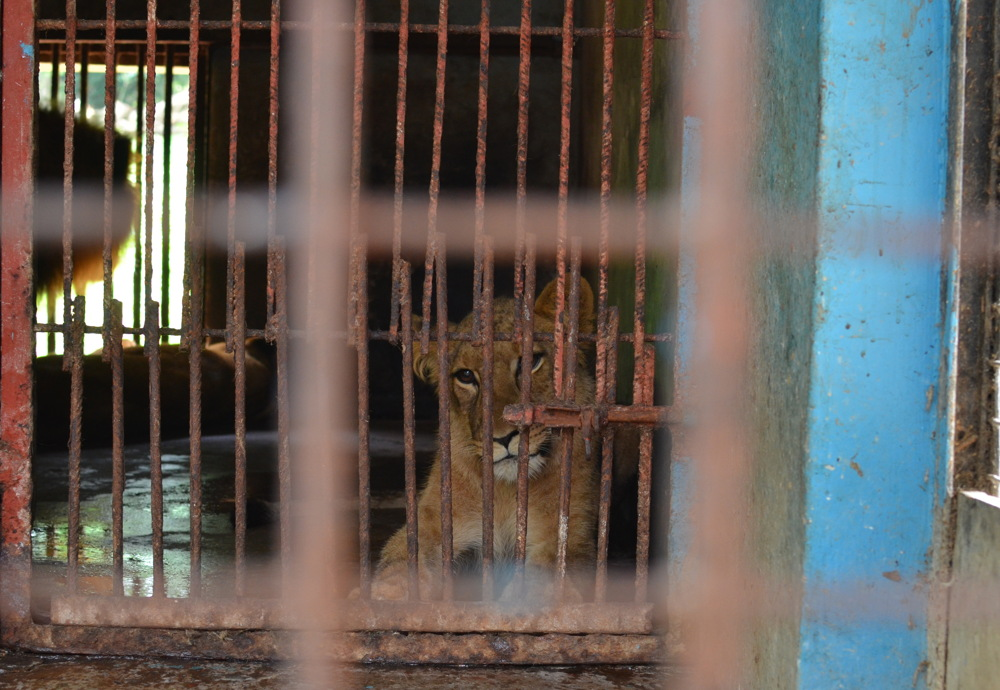 photoblog image Caged