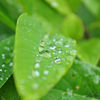 Raindrops....