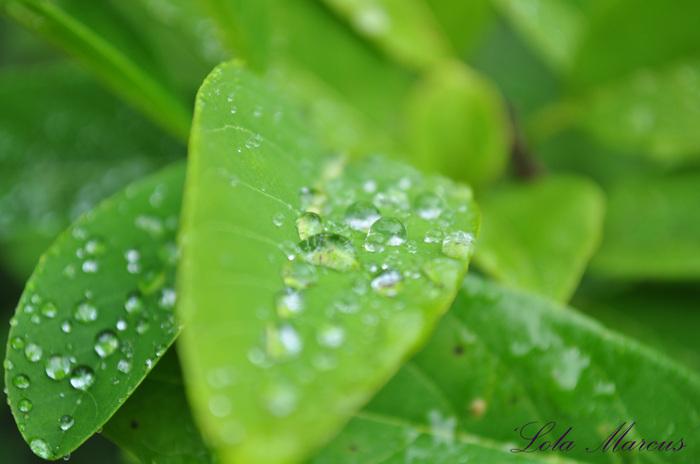 photoblog image Raindrops....