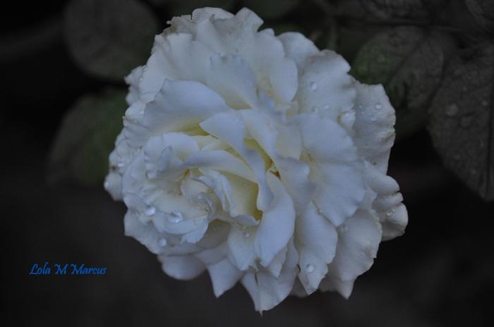 photoblog image Purity...