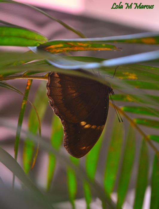 photoblog image Lepidoptera