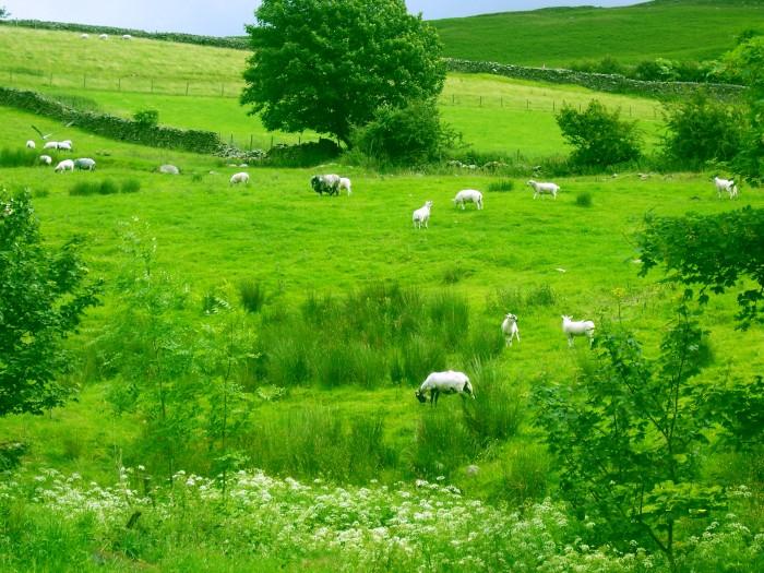 photoblog image Animal Farm