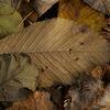 Löv - Leaves 5