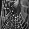 Spindelväv - Spider's web