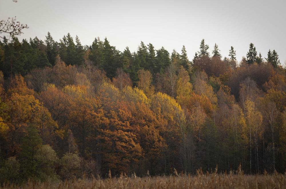 photoblog image Höst - Fall