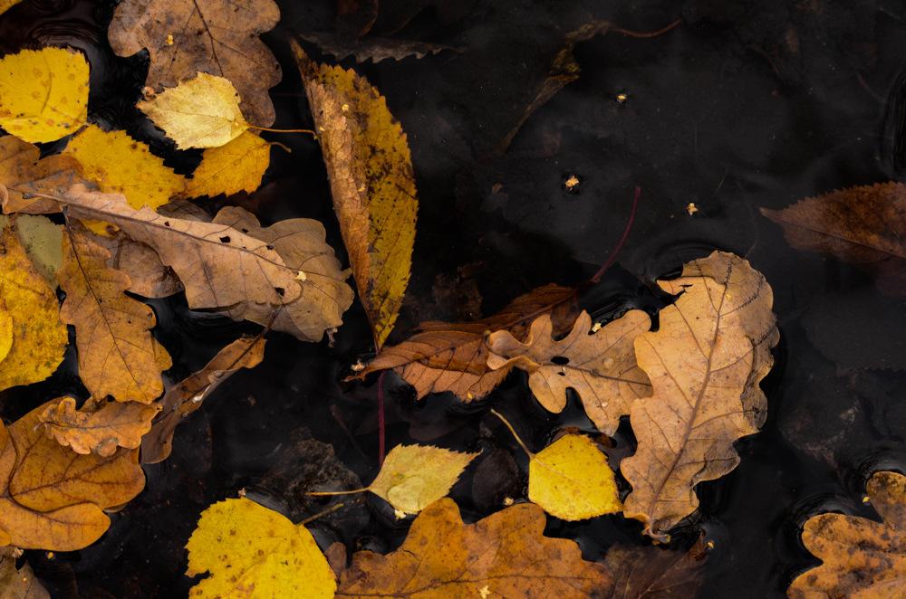 photoblog image Löv - Leaves