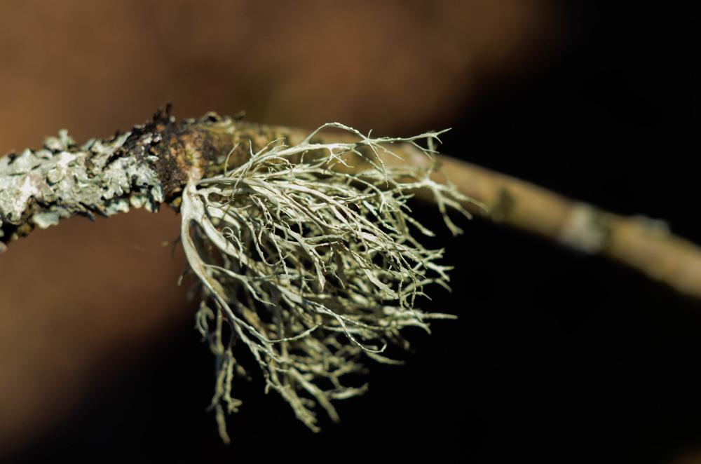 photoblog image Lav - Lichen