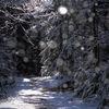 Vart tog våren vägen - What happened with spring