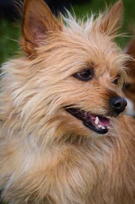 photoblog image Hund - Dog