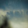 Dimmig morgon - Misty morning