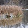 Vass - Reeds
