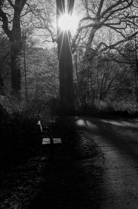 photoblog image En plats i solen - A bench in the sun