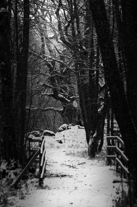 photoblog image Stig - Path