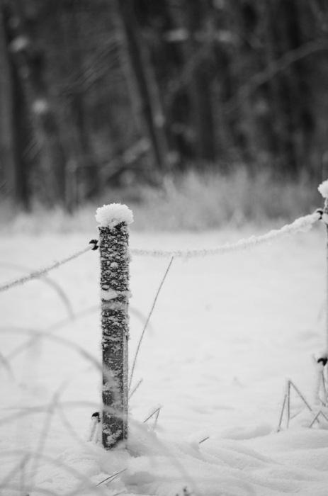 photoblog image Stolpe - Fence post
