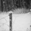 Stolpe - Fence post