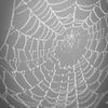 Spindelväv - Spider's web
