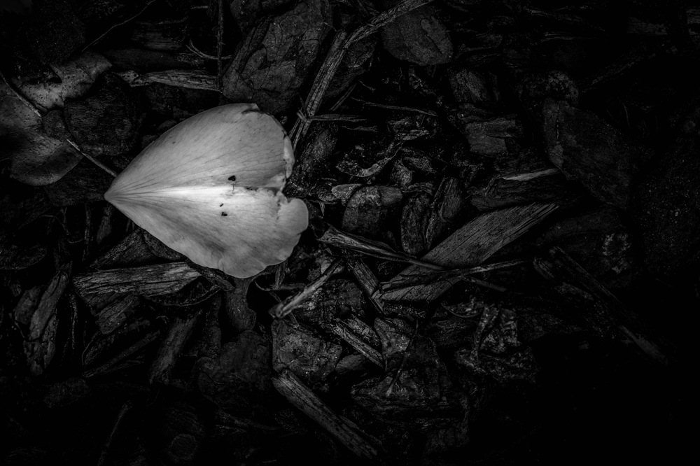 photoblog image Kronblad - Petal